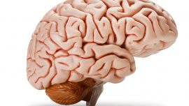 Beyin ve Sinir Cerrahisi Polikliniği